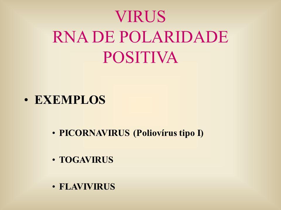 RNA DE POLARIDADE POSITIVA