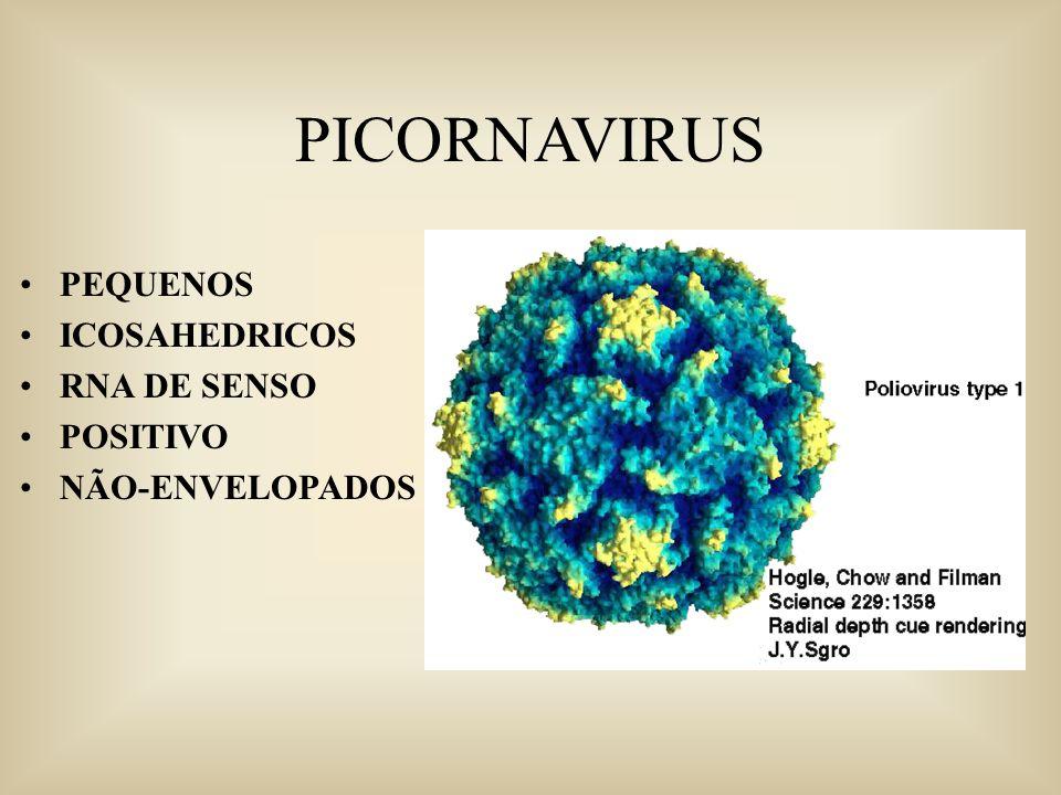 PICORNAVIRUS PEQUENOS ICOSAHEDRICOS RNA DE SENSO POSITIVO