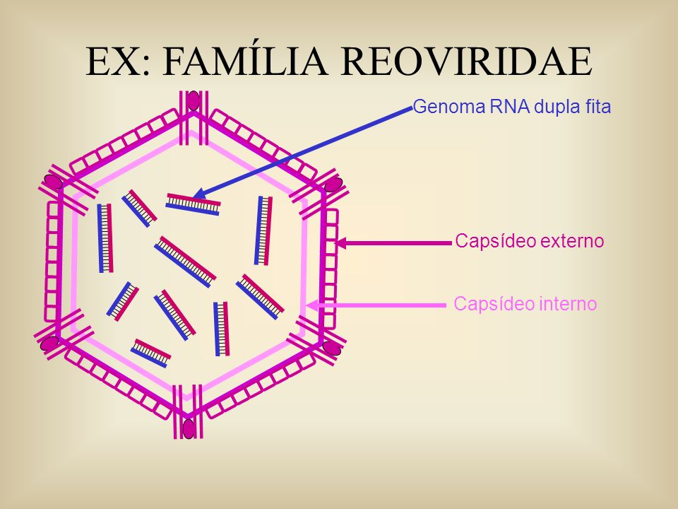 EX: FAMÍLIA REOVIRIDAE