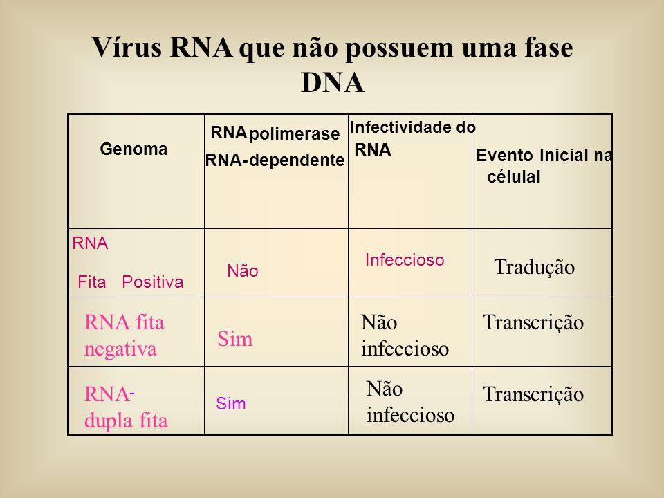 Vírus RNA que não possuem uma fase DNA