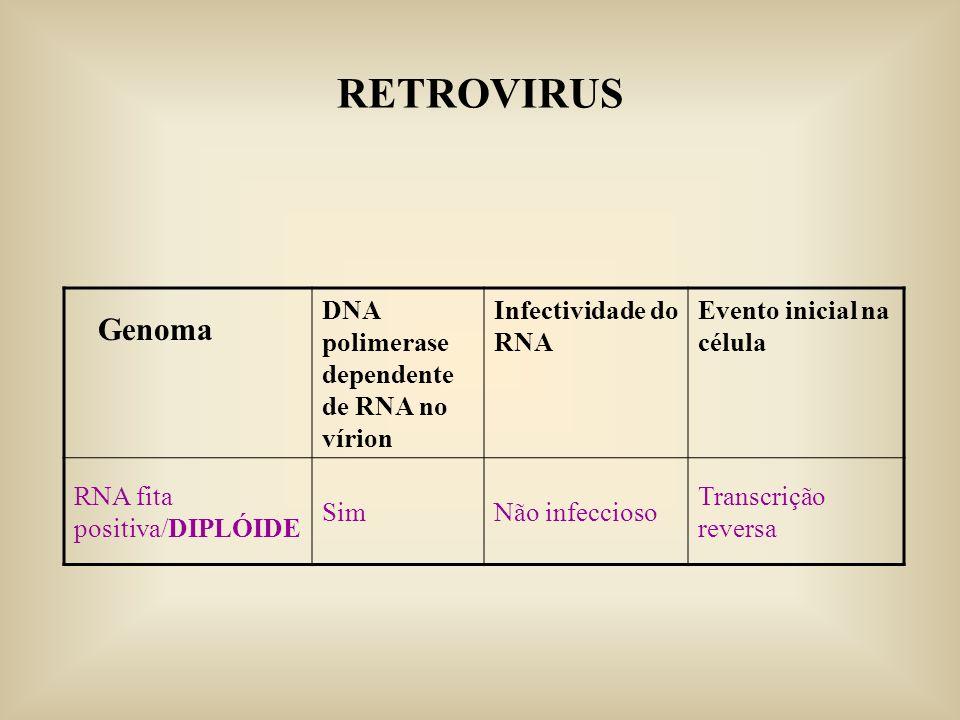 RETROVIRUS Genoma DNA polimerase dependente de RNA no vírion