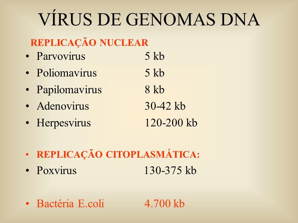 VÍRUS DE GENOMAS DNA Parvovirus 5 kb Poliomavirus 5 kb