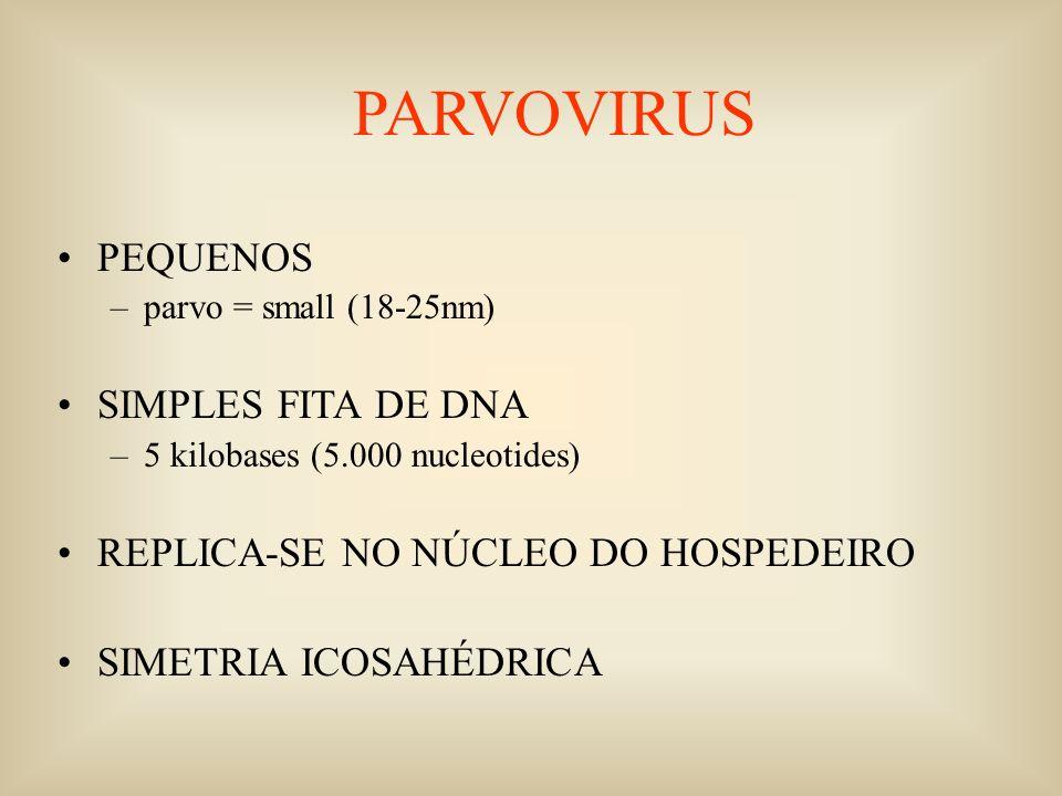 PARVOVIRUS PEQUENOS SIMPLES FITA DE DNA