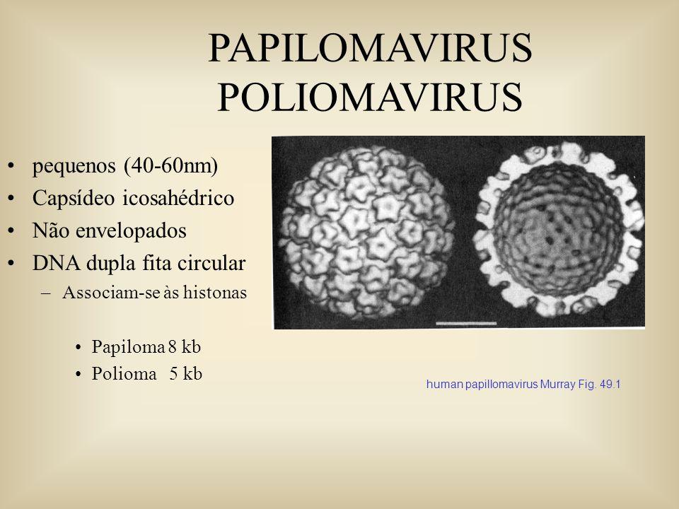 PAPILOMAVIRUS POLIOMAVIRUS