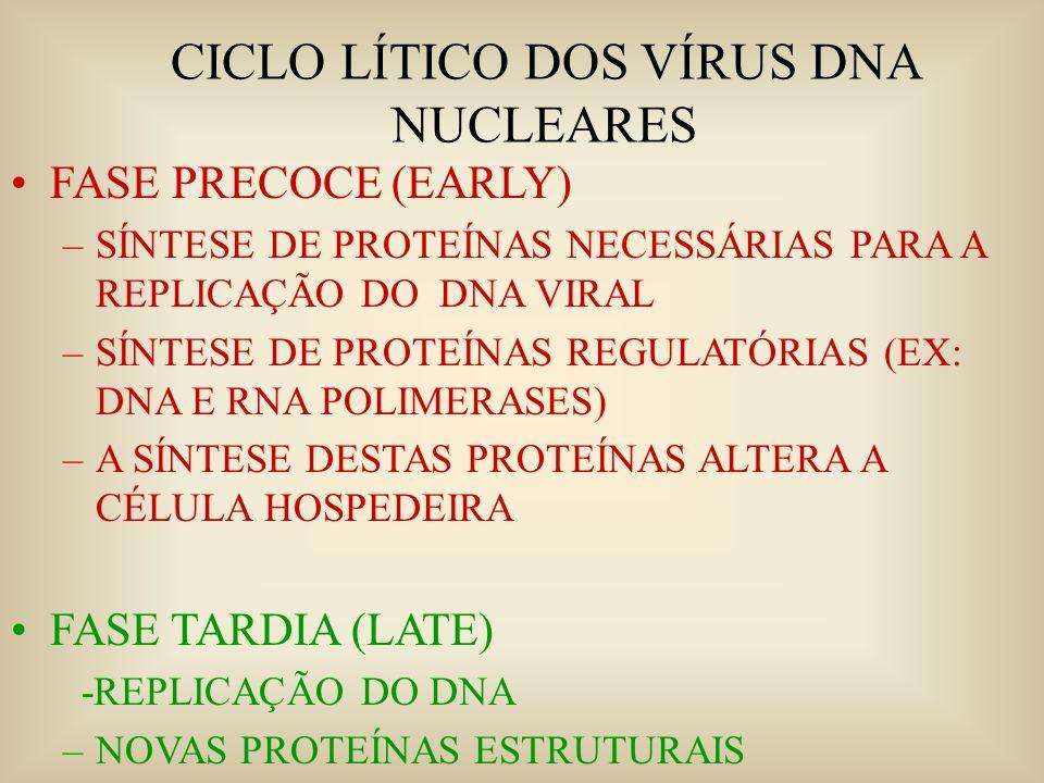 CICLO LÍTICO DOS VÍRUS DNA NUCLEARES
