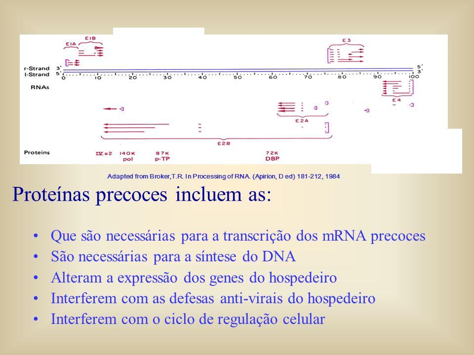 Proteínas precoces incluem as: