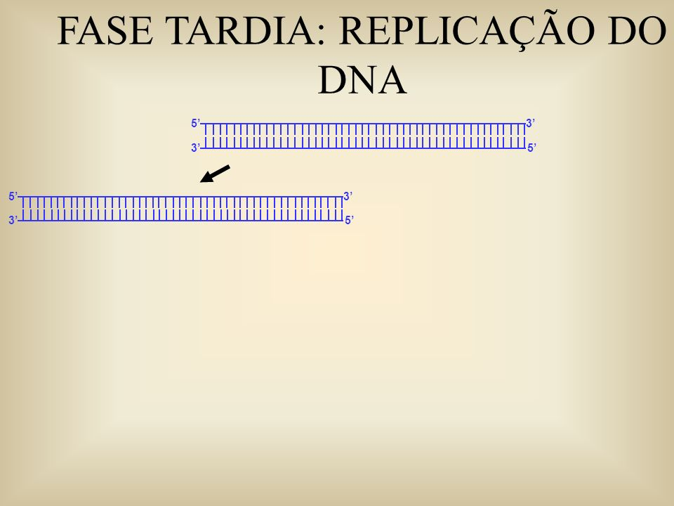 FASE TARDIA: REPLICAÇÃO DO DNA