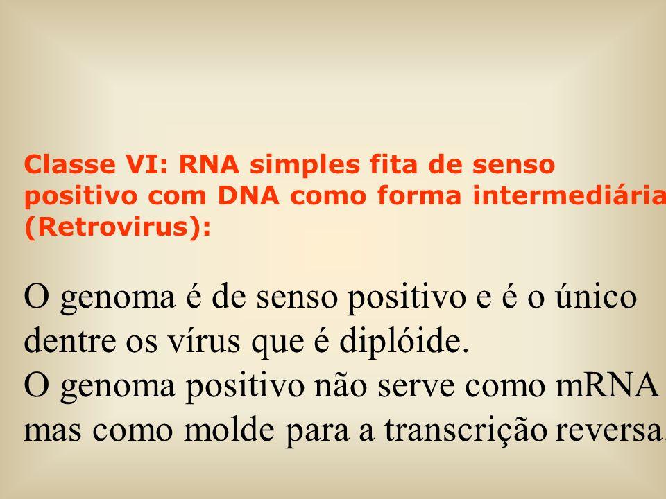 Classe VI: RNA simples fita de senso positivo com DNA como forma intermediária (Retrovirus):