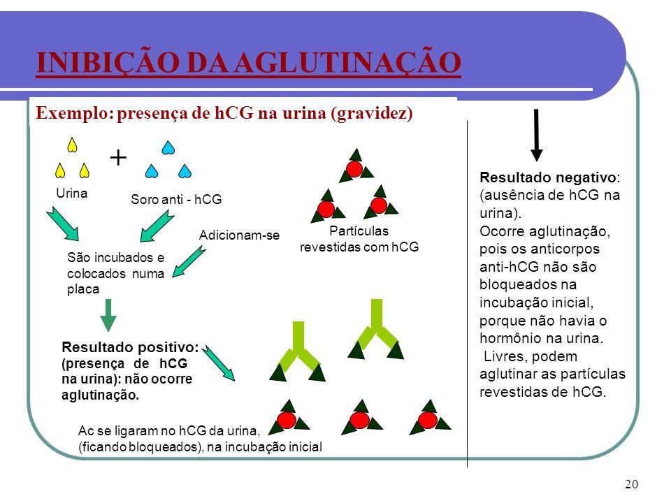Partículas revestidas com hCG