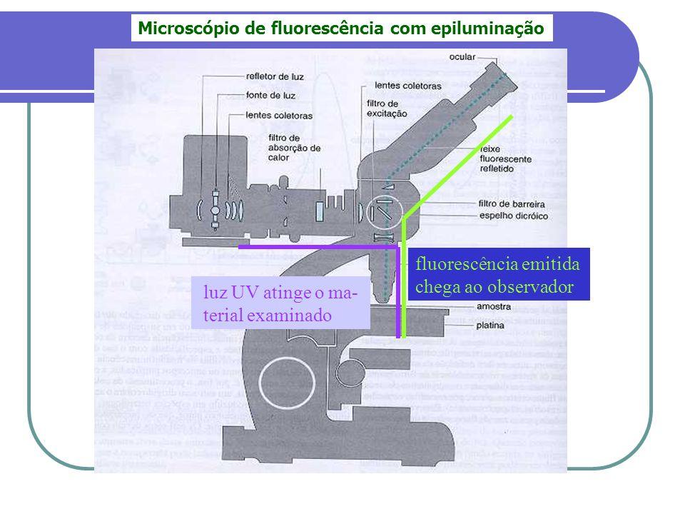 fluorescência emitida chega ao observador luz UV atinge o ma-