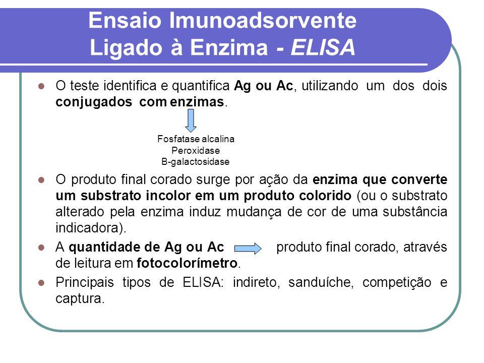Ensaio Imunoadsorvente Ligado à Enzima - ELISA