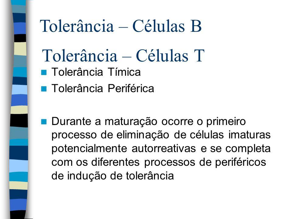 Tolerância – Células B Tolerância – Células T Tolerância Tímica