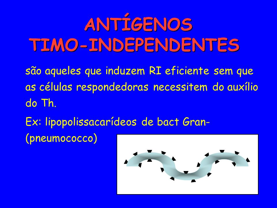 ANTÍGENOS TIMO-INDEPENDENTES
