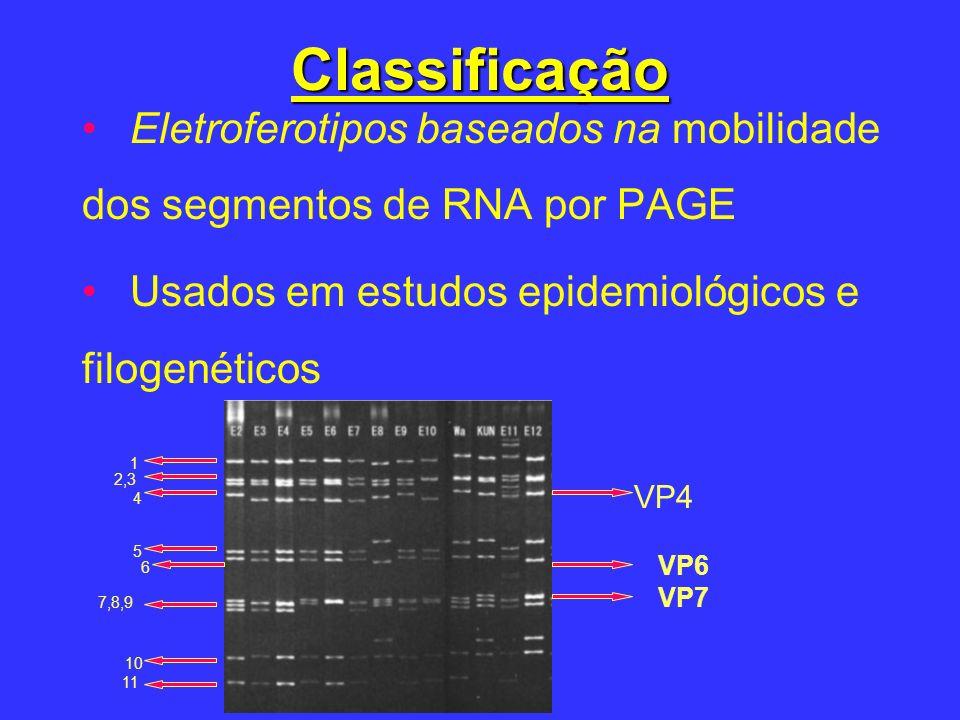 Classificação Eletroferotipos baseados na mobilidade dos segmentos de RNA por PAGE. Usados em estudos epidemiológicos e filogenéticos.