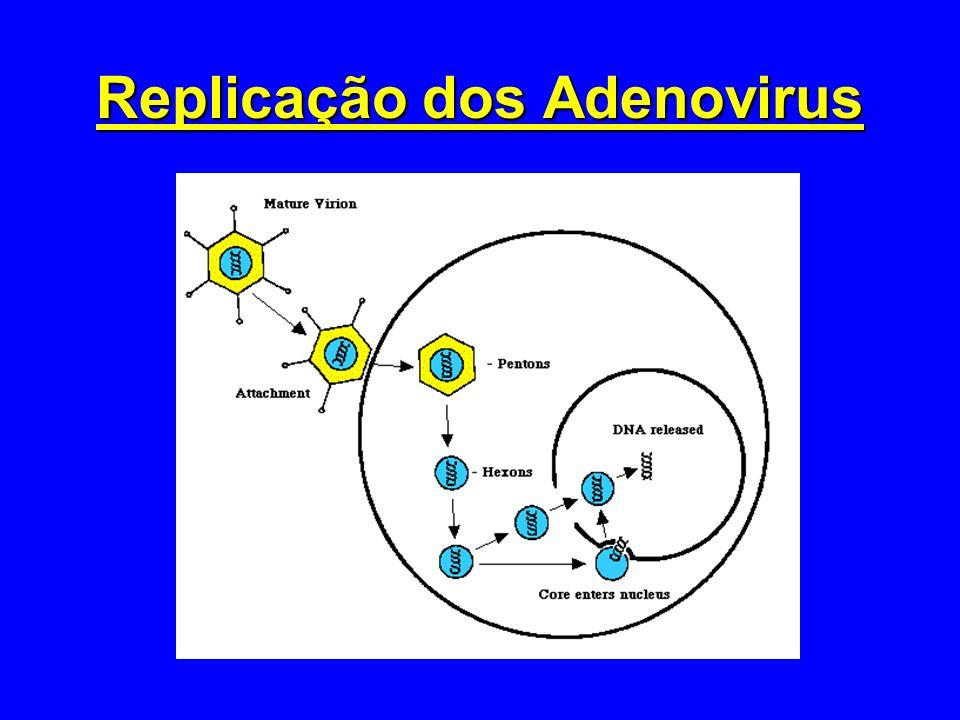 Replicação dos Adenovirus