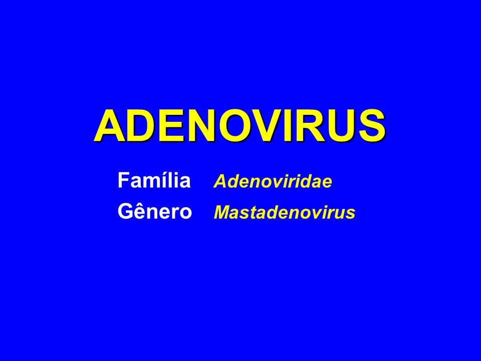 Família Adenoviridae Gênero Mastadenovirus