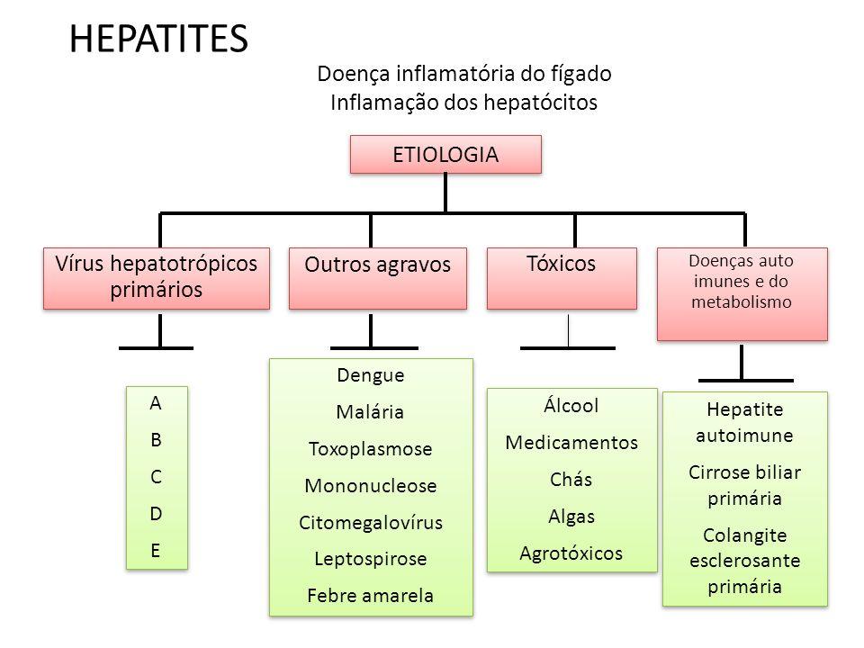 HEPATITES Doença inflamatória do fígado Inflamação dos hepatócitos