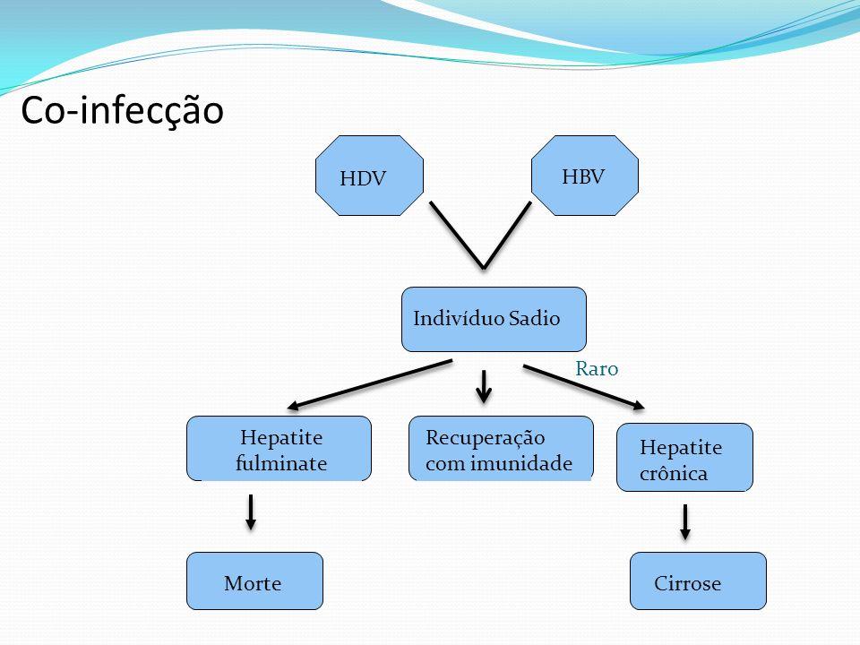 Co-infecção HDV HBV Indivíduo Sadio Raro Hepatite fulminate