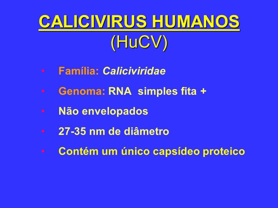 CALICIVIRUS HUMANOS (HuCV)