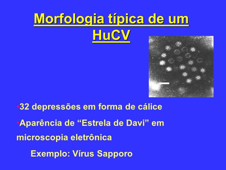 Morfologia típica de um HuCV