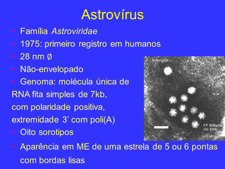 Astrovírus Família Astroviridae 1975: primeiro registro em humanos