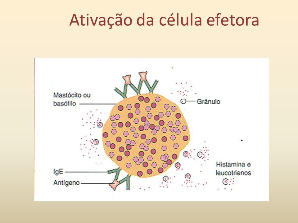 Ativação da célula efetora
