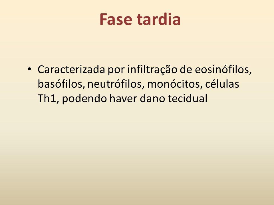 Fase tardia Caracterizada por infiltração de eosinófilos, basófilos, neutrófilos, monócitos, células Th1, podendo haver dano tecidual.