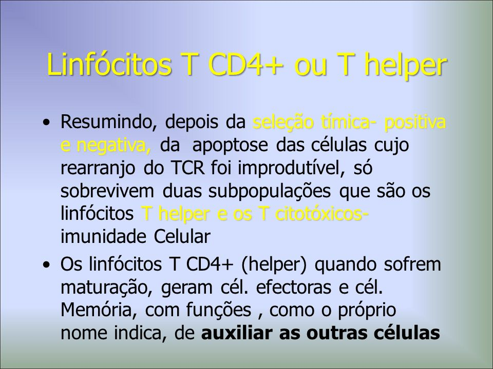 Linfócitos T CD4+ ou T helper