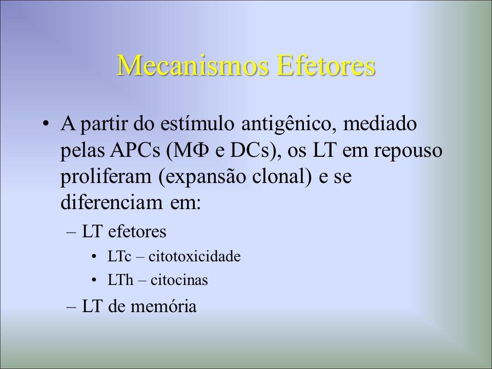 Mecanismos Efetores
