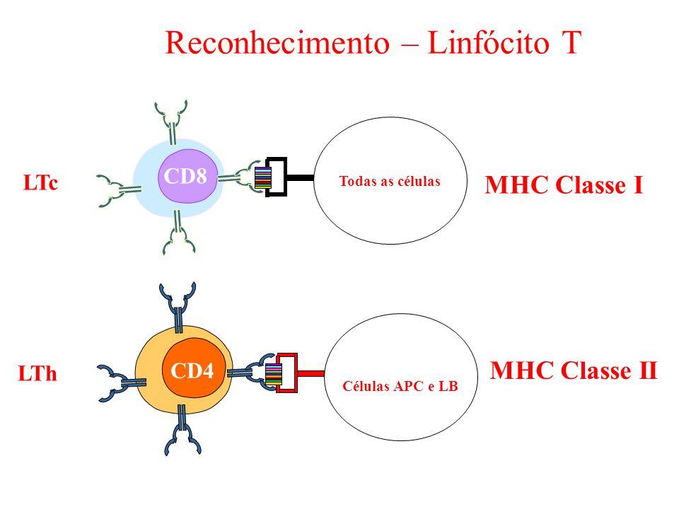 Reconhecimento – Linfócito T