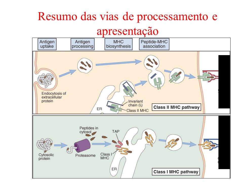 Resumo das vias de processamento e apresentação