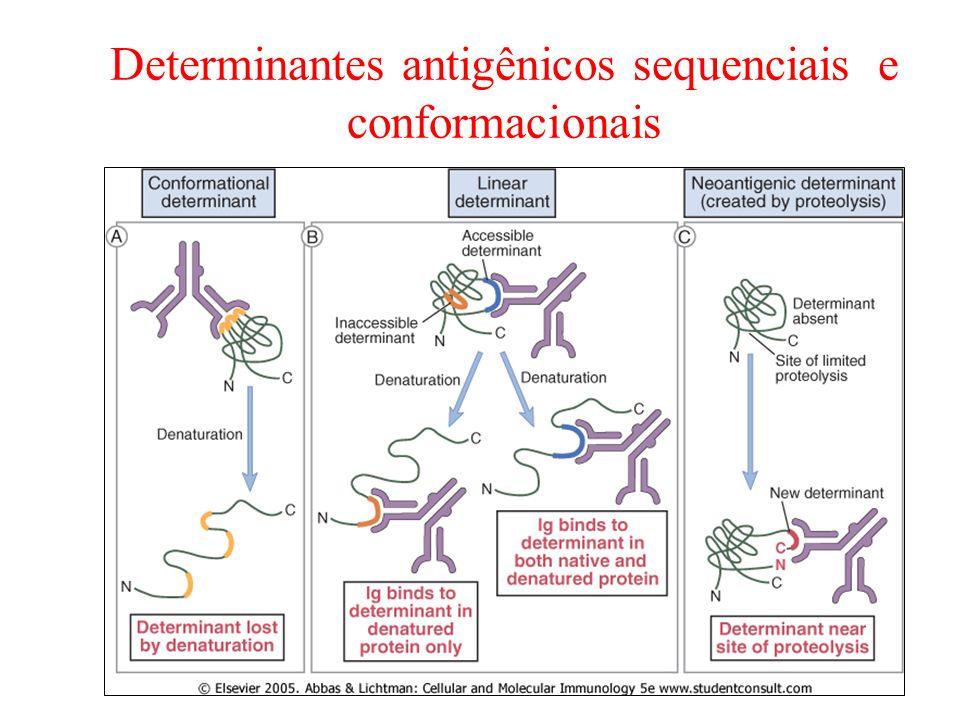 Determinantes antigênicos sequenciais e conformacionais