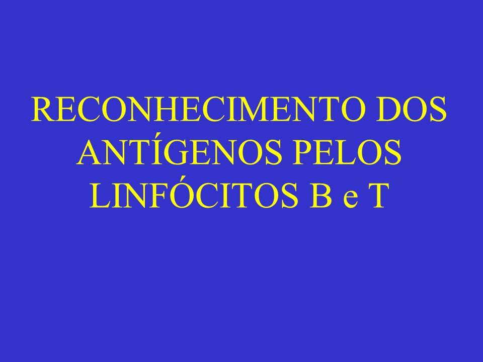 RECONHECIMENTO DOS ANTÍGENOS PELOS LINFÓCITOS B e T