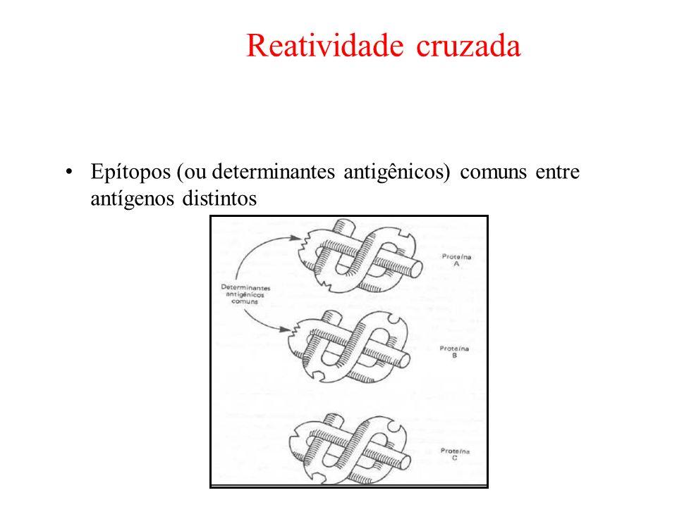 Reatividade cruzada Epítopos (ou determinantes antigênicos) comuns entre antígenos distintos