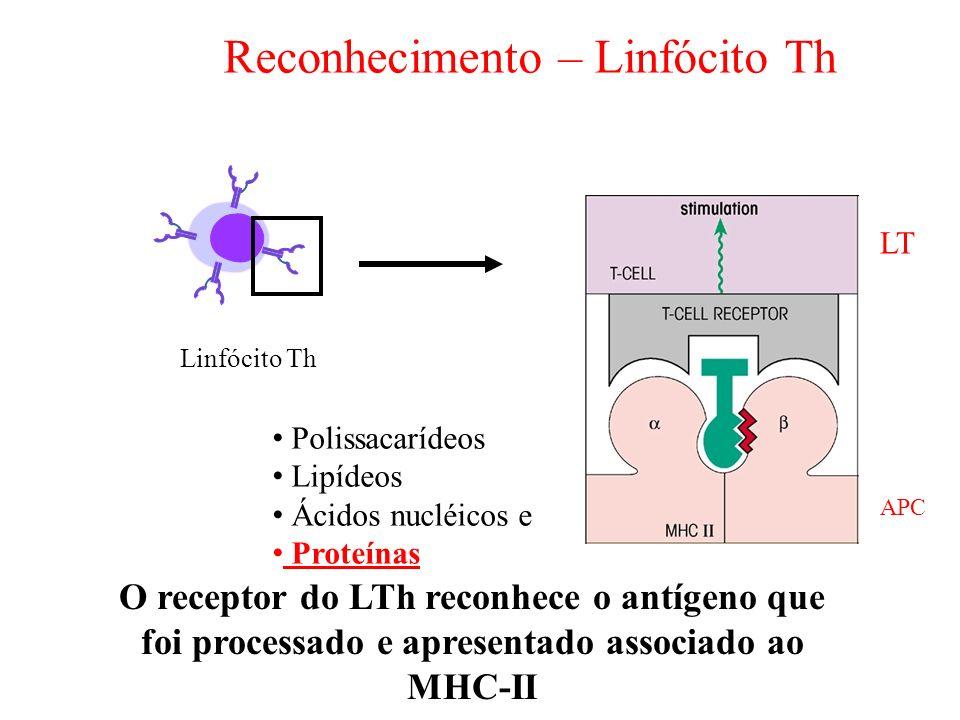 Reconhecimento – Linfócito Th