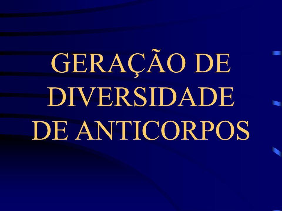 GERAÇÃO DE DIVERSIDADE DE ANTICORPOS