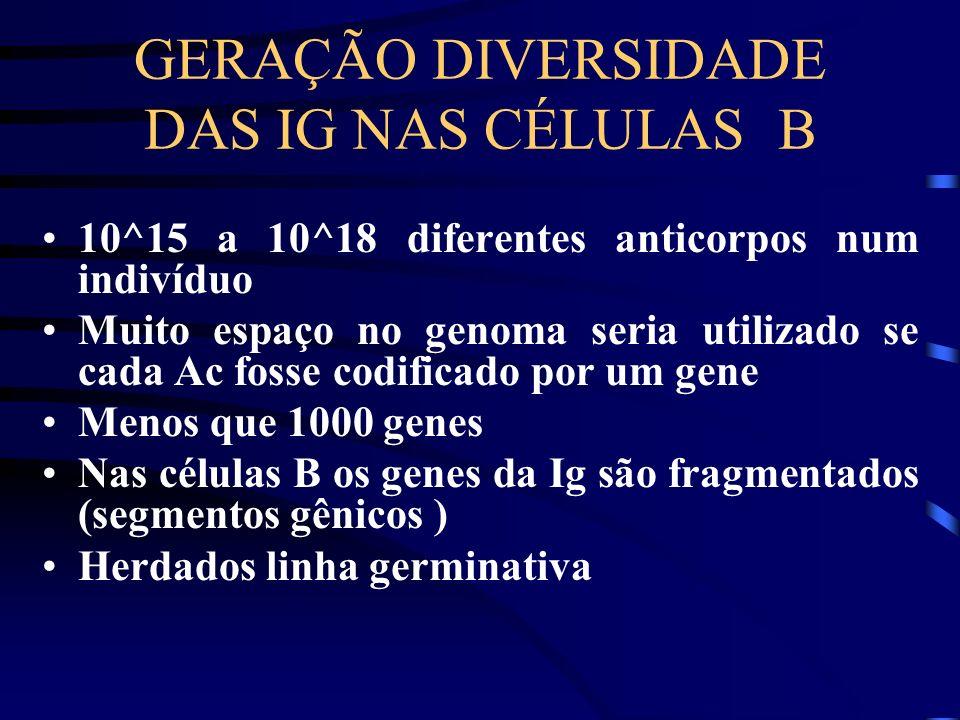 GERAÇÃO DIVERSIDADE DAS IG NAS CÉLULAS B