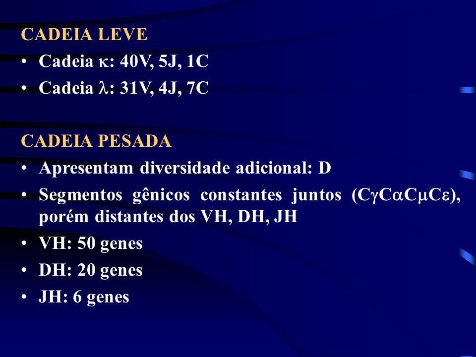 CADEIA LEVE Cadeia : 40V, 5J, 1C. Cadeia : 31V, 4J, 7C. CADEIA PESADA. Apresentam diversidade adicional: D.
