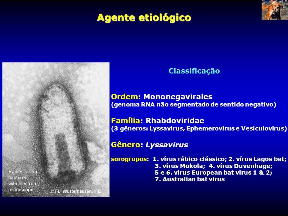 Agente etiológico Classificação Ordem: Mononegavirales
