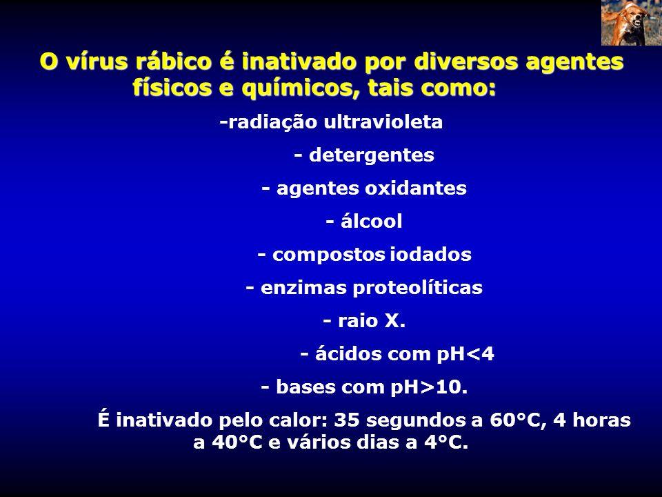 -radiação ultravioleta - enzimas proteolíticas