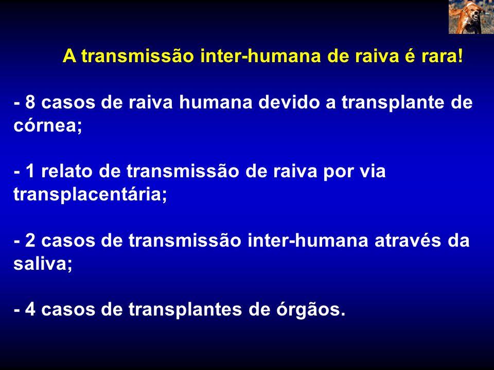 - 8 casos de raiva humana devido a transplante de córnea;