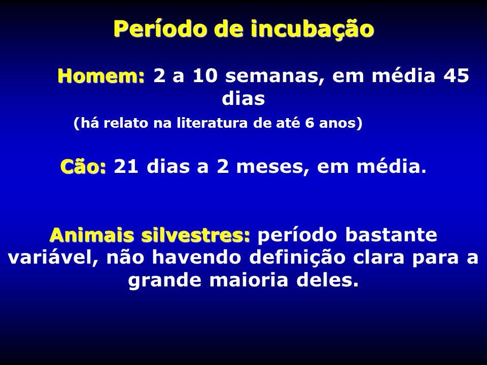 Período de incubação Homem: 2 a 10 semanas, em média 45 dias