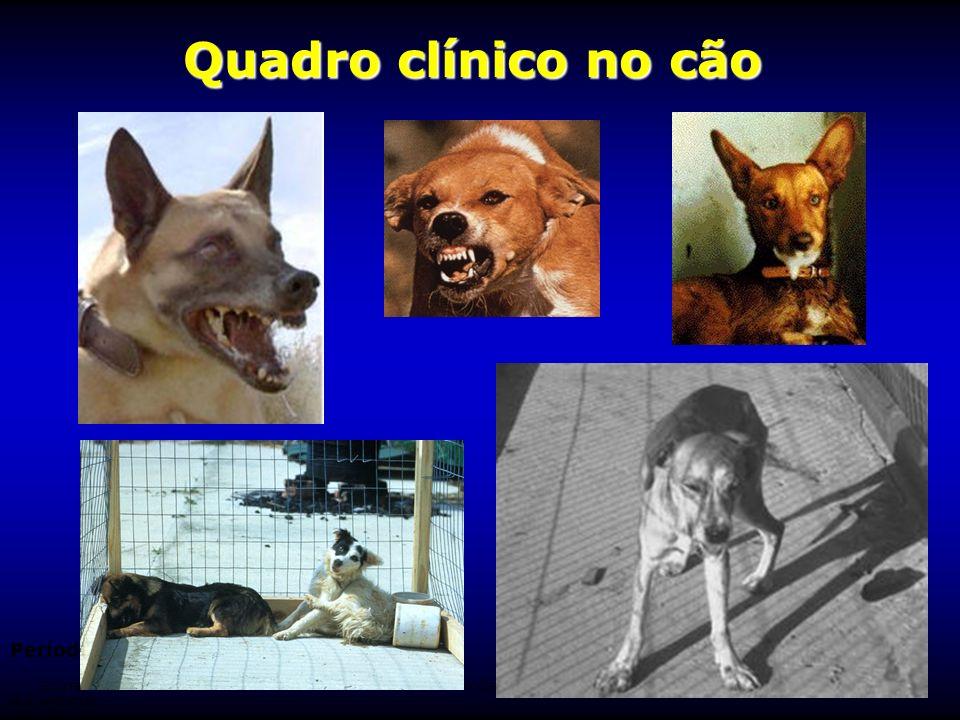 Quadro clínico no cão