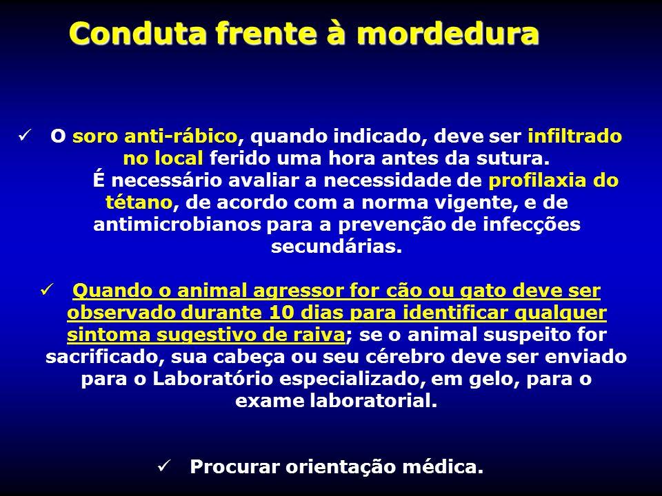 Conduta frente à mordedura Procurar orientação médica.