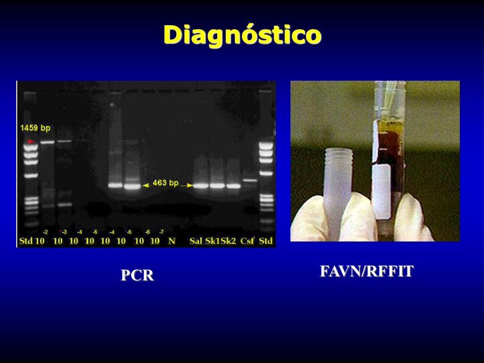 Diagnóstico FAVN/RFFIT PCR