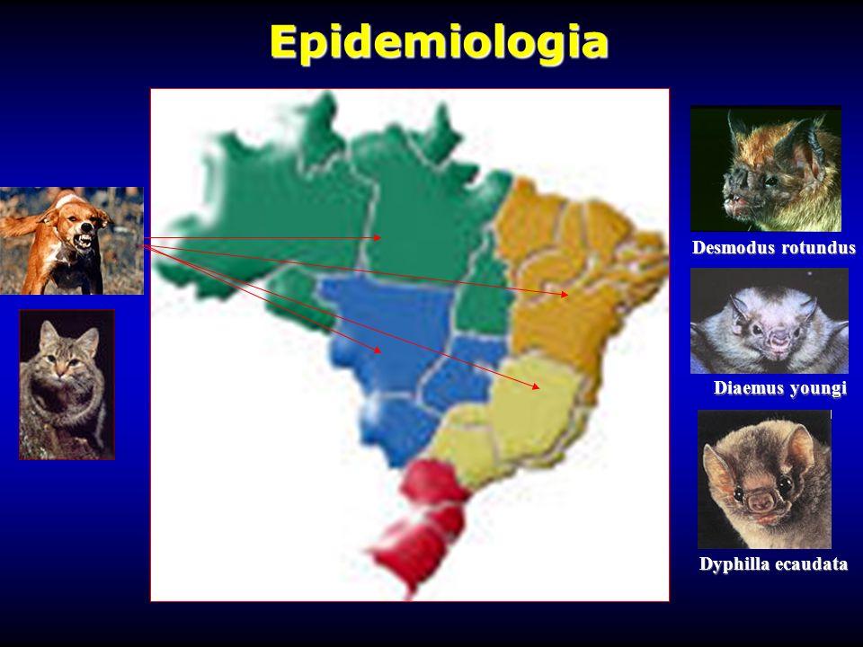 Epidemiologia Desmodus rotundus Diaemus youngi Dyphilla ecaudata