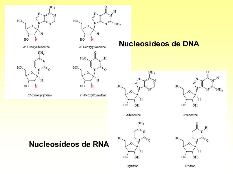 Nucleosídeos de DNA Nucleosídeos de RNA