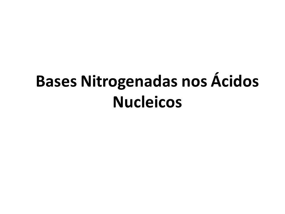 Bases Nitrogenadas nos Ácidos Nucleicos