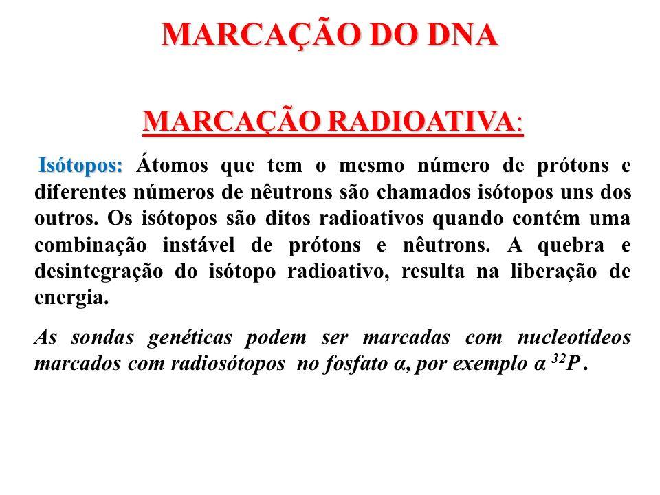 MARCAÇÃO DO DNA MARCAÇÃO RADIOATIVA: