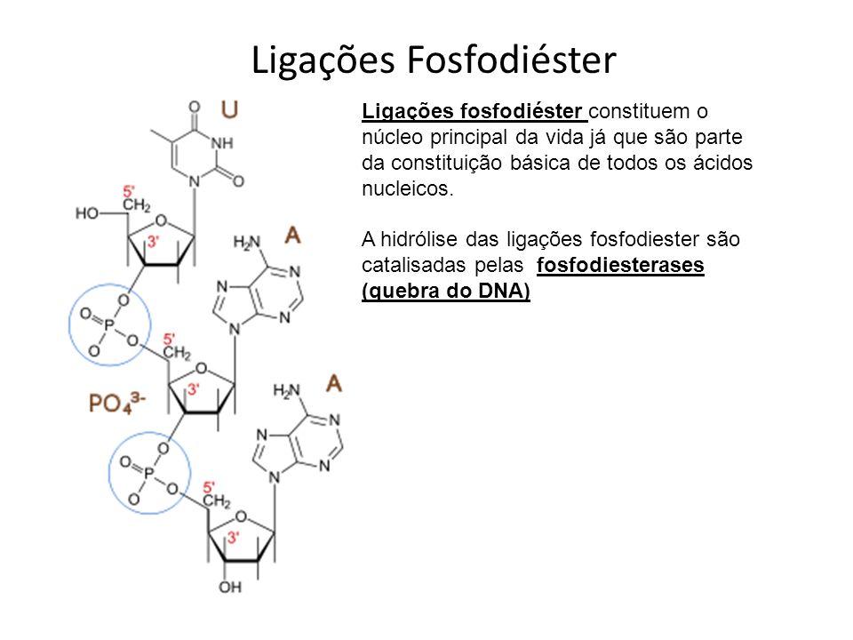 Ligações Fosfodiéster